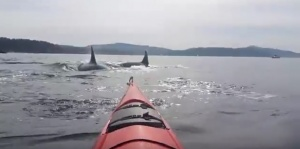 Killer Whale Encounter